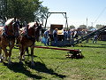 Horse powered elevator and wagon hoist
